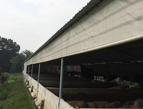 养殖场防风帘案例